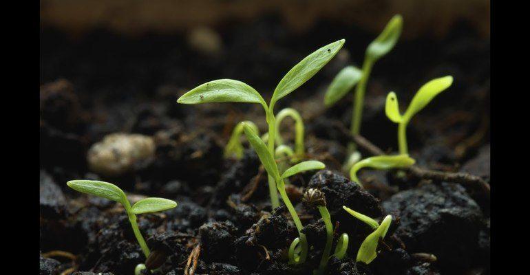 К чему снятся ростки растений