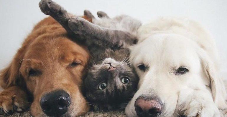 К чему снятся собаки и кошки