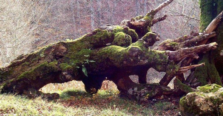 Дерево упало во сне