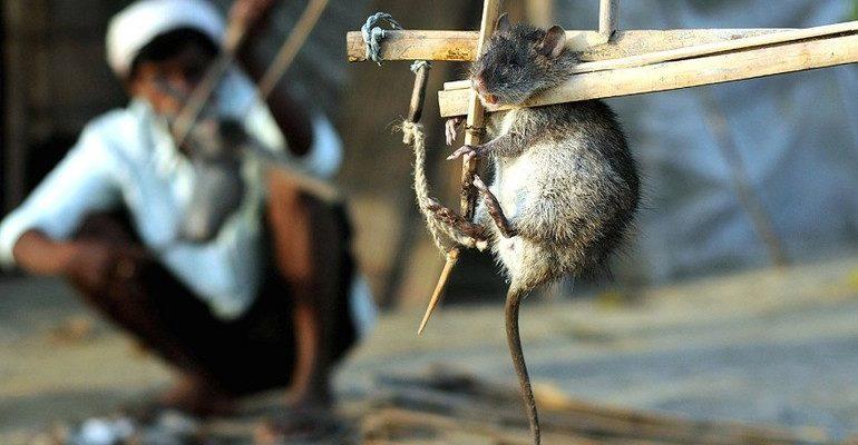 Убить крысу во сне
