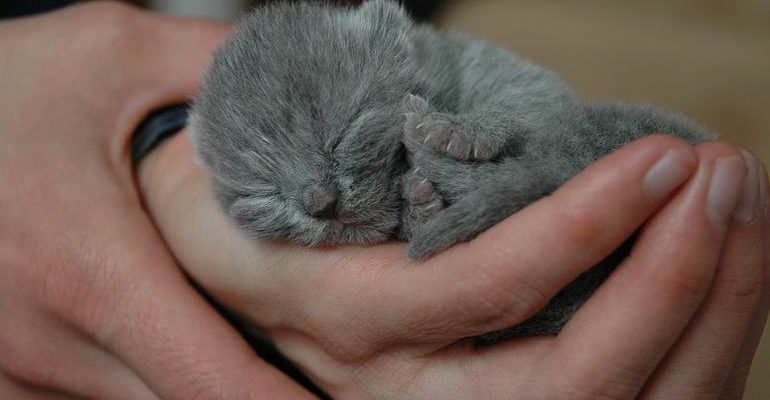 видеть во сне котенка маленького на руках