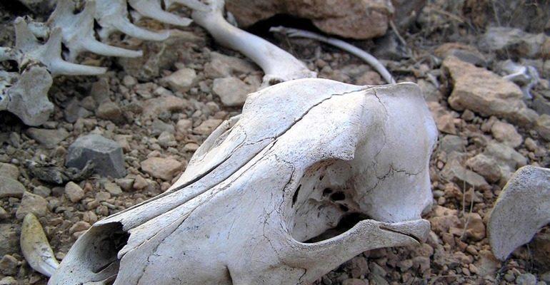 К чему снится череп сонник