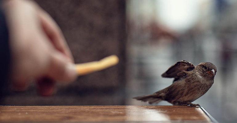 К чему снится птица залетевшая в дом