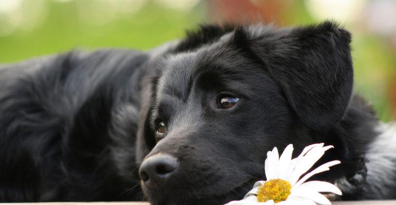 К чему снится собака сонник