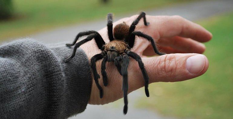 К чему снится укус паука сонник