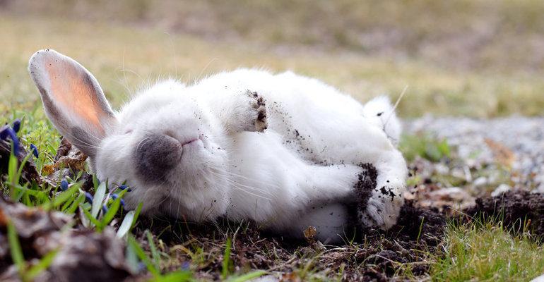 К чему снятся мертвые кролики