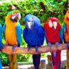 К чему снятся попугаи