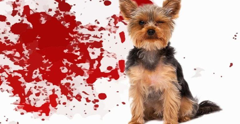 Собака в крови