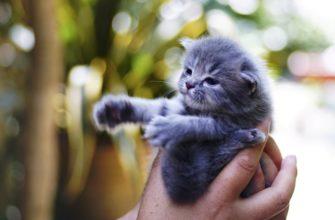 Сонник спасти котенка к чему